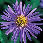 20 perennial flowers