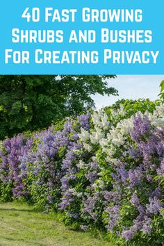 Shrubs For Privacy, Privacy Landscaping, Outdoor Landscaping, Outdoor Plants, Front Yard Landscaping, Outdoor Gardens, Privacy Screen Plants, Planting For Privacy, Backyard Privacy Trees