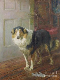 The Glove, 1913 Painting by Briton Riviere Rough Collie, Vintage Dog, Sheltie, Animal Paintings, Dog Art, Border Collie, Art Prints, Pets, Antiques