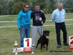 WORLD BEST Rottweiler  .jpg (800×600)