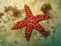 life of aquatic animals