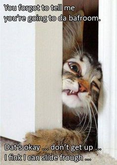fce5b69415 Let me in--lol  ever felt like you were the cat and a guy you liked was the  room  lol LET ME IN!