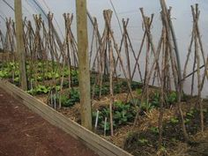 Spring plantings in kitchen garden poly tunnels