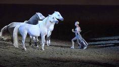 Liberty with 3 horses - Sylvia Zerbini - Night of the Horse 2016 - Del M...