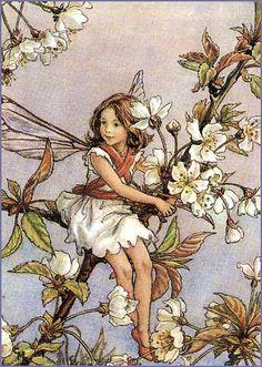 The Cherry Tree Fairy