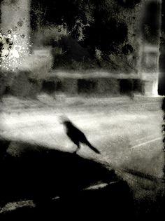 black crow      variation