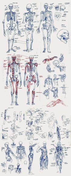 Trying to level up by Matt Rhodes Esqueleto y dinámica de movimiento humana 770172c831a
