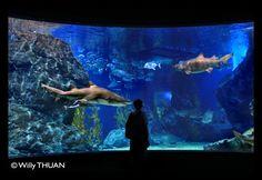 Siam Ocean World in Siam Paragon Shopping Mall in Bangkok