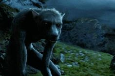 """""""There was a terrible snarling noise. Lupin's head was lengthening. So was his body. His shoulders were hunching. Hair was sprouting visibly on his face and hands, which were curling into clawed paws. Crookshanks's hair was on end again; he was backing away —"""". Chapter 20, The Dementor's Kiss"""