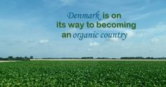 Denmark is on its way to becoming an organic country. But why is organic food important? And what lessons can Denmark teach the world?    Imagine a organic country. Does this seem possible or realistic? In the United States, where only 1 percent of U.S. farmland is certified organic, this may seem like a far-away dream. But in Denmark, this vision is much closer to reality.    First of all, people in Denmark have a great appreciation for organic