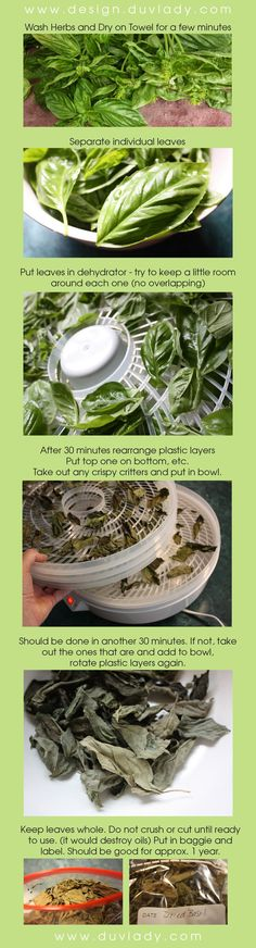How to dry herbs in dehydrator_drying basil to store_easy herbs to keep_dried basil