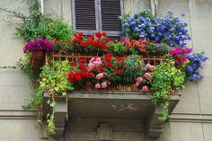 #flowres #balcony
