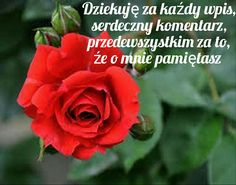 crvena-ruza - My site Beautiful Flowers Wallpapers, Beautiful Roses, Flower Wallpaper, Of Wallpaper, Afternoon Messages, Roses Only, Romantic Shayari, Good Afternoon, Wishes Images