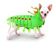 Green Caterpillar Chihuahua Dog Costume - Insect Pet Costumes