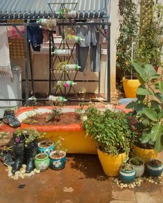 From waste to beauty. Terrace garden using old soap dispensers, bathtub, boots. All you need is some mud and some beautiful plants :)