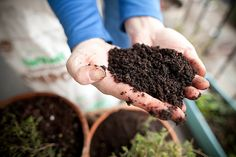 Container Gardening: Tips for apartment dwellers and small spaces