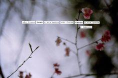 Cartas à Alice.: Photo