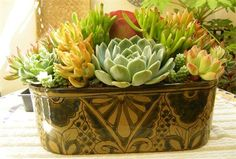 Lovely container with succulents