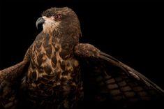 Deadly Brain Disease Is Driving Swamp Birds Insane