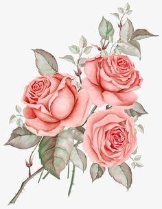 *✿**✿**✿**✿*✿* Botanical Flowers, Botanical Prints, Pink Flowers, Watercolor Flowers, Watercolor Art, Arte Country, Blush Roses, Peach Blush, Pastel Floral