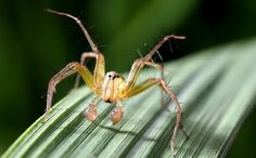 Beneficial Spiders Become Victims of Pesticides