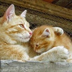 Mother Cat and Kitten                                                                                                                                                                                 More