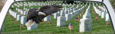 American Eagle at Arlington Cemetery Window Mural