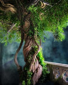 Father Tree Amazing Pictures Photo Print by Michael Taggart Photography green blue surreal magical mystical