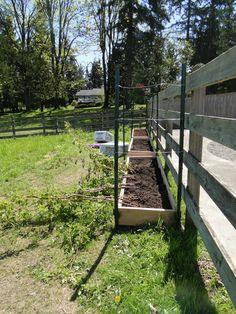 Part 2 Garden Scrapbook: raspberries-planting