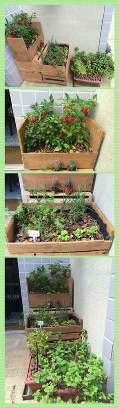 jardim vertical belo horizonteHortinha orgânica no ap Simples e