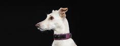 Check our Rocker Purple Skin Dog Collar at www.pjays.de