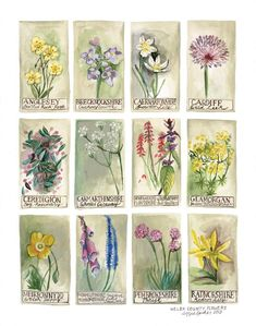 The Welsh county flowers are illustrated in the unusual species chart. These bold prints are perfect for framing up and brightening walls. Your print will come rolled in a tube. Original Artwork, Original Paintings, Flower Chart, Flower Frame, Botanical Illustration, Flower Prints, Fine Art Paper, Fine Art Prints, Poster Prints