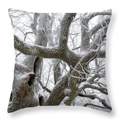 Old tree on winter misty day. Misty Day, Insert Image, Pillow Sale, Travel Photographer, Basic Colors, Pillow Inserts, Color Show, Beautiful Images, Colorful Backgrounds