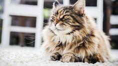 Kitten, Kissa, Makea, Eläinten, Viikset