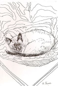 Original fine art pen and ink siamese cat by amostroutstudio Sleepy pretty kitty