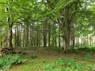92.84 acres, Lochnaw Wood, Stranraer, Galloway, Lowlands