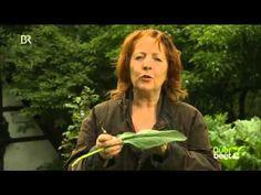 Querbeet - Pflanzenjauche mit Beinwell herstellen 09.07.2014 BR