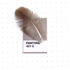 A little feather I found during my morning walk. I don't know the type of bird it came from, but I love that gray and brown can look so good together. Tiny Pantone Color Matching by designer Inka Mathew Pantone Color Match, Pantone Colour Palettes, Pantone Colours, Pantone Swatches, Color Swatches, Colour Schemes, Color Patterns, Pantone Matching System, Deep Space Sparkle