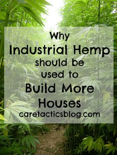 Why industrial hemp should be used to build more houses