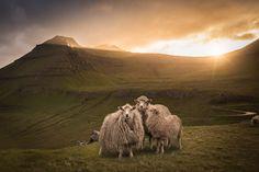 Midnight Sun in the Faroe Islands - A lost world - Adventure & Landscape Photographer - Tom Archer Midnight Sun, Faroe Islands, Atlantic Ocean, Archipelago, Landscape Photographers, Archer, Mixed Media, Lion Sculpture, Lost
