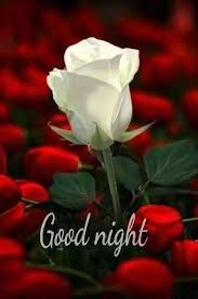 Flower Good Night Images Hd Download Flowers Beautiful Roses Rose