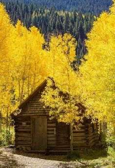 Rocky Mountain Cabin trees autumn gold leaves fall colors yellow cabin foliage