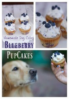Homemade dog cake made with blueberries cupcakes recipes nationalDogDay Birthday Dog cakes Homemade Cupcake Recipes, Dog Cake Recipes, Dog Treat Recipes, Dog Food Recipes, Dog Safe Cake Recipe, Dog Biscuit Recipes, Homemade Cakes, Puppy Treats, Diy Dog Treats