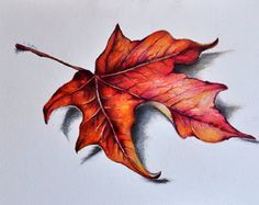 Original Colored Pencil Drawing, Red Maple Leaf, Botanical Drawing 5.5x8 inch