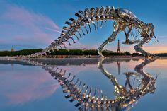 philippe-pasquas-life-size-t-rex-is-invading-paris-1