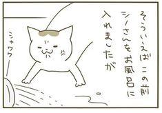 いつもありがとうございます。暖かいコメントやいいね、日々の励みになっております!安定のうるささ。シノさんも我が家に来てから初のお風呂。文句を言いながらも大人し…