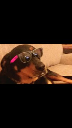 Make my dank dog famous