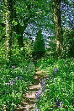 twisting track - a woodland walk in Durham | Flickr - Photo Sharing!
