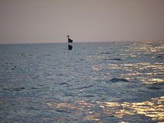 S/Y Dolphin Dance sailing blog | a Finnish Hallberg-Rassy 29 sailing in the Northern Europe: Bergkvara to Ystad