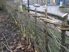 Hedge Laying by Stan160, via Flickr